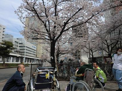 川崎駅近くでお花見